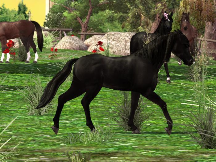 Horse Life Download Gratis